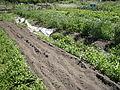 Seattle - Marra Farm 08.jpg