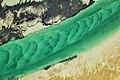 Shark Bay seagrass bed.jpg