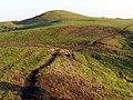 Sheep tracks and barrows on Bronkham Hill - geograph.org.uk - 298155.jpg