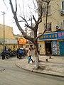 Shibei, Qingdao, Shandong, China - panoramio (115).jpg