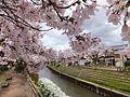 Shimizumachi, Toyama, Toyama Prefecture 930-0036, Japan - panoramio (5).jpg