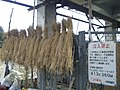 Shinkansen under girder use cases by dried rice straw.jpg