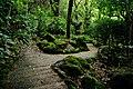 Side Trail @ Waimea Valley (5217051496).jpg