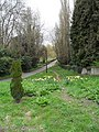 Signs of spring in the lane approaching St James, Stedham - geograph.org.uk - 1804897.jpg