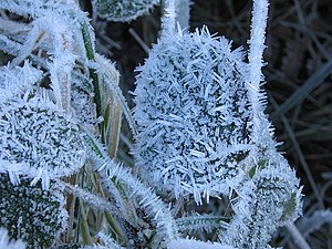 Single crystals - geograph.org.uk  (Photo credit: Wikipedia)