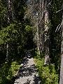 Skuleskogen National Park boardwalk.jpg