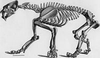 Smilodon populator skeletal.jpg