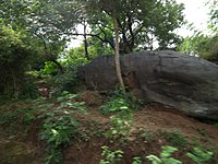 Snap from Bannerghatta National Park Bangalore 8422.JPG