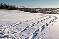 Snow Shoe Tracks (23822258633).jpg