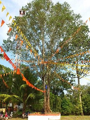 Sree Narayanapuram Thrikkayil Temple - Image: Sreenarayana 1234