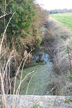 English: Stagnant stream As can be seen the st...