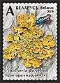Stamp of Belarus - 2019 - Colnect 873304 - Common Orange Lichen Xanthoria parietina.jpeg
