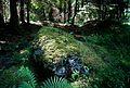 Standing stone (fallen) Bladåker 83-1 Uppland Sweden.jpg