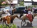 Starr-030705-0040-Cordyline fruticosa-July 4 Parade-Makawao-Maui (24528655212).jpg