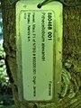 Starr-091104-0858-Pithecellobium alexandri-plant tag-Kahanu Gardens NTBG Kaeleku Hana-Maui (24360864563).jpg
