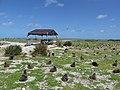 Starr-150328-1860-Coronopus didymus-baseyard-Central Eastern Island-Midway Atoll (25176783281).jpg