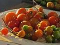 Starr-170108-6451-Solanum lycopersicum-landrace varieties-Hawea Pl Olinda-Maui (31622538594).jpg