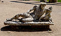 Statue of the Nile in Canopo of Villa Adriana (Tivoli).jpg
