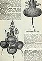 Steckler's seeds - 1905 (1905) (14740617666).jpg