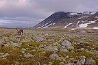 Steindalen and Lønstinden in Saltfjellet.jpg