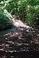 Steps in the woods - geograph.org.uk - 522614.jpg