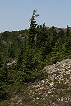 Stillaguamish Peak 5533.JPG