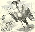 Stories about birds of land and water (1874) (14747649871).jpg