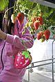 Strawberry (6889385998).jpg