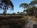 Strijbeekse Heide File110.jpg
