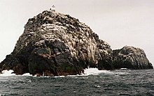 A grey and rocky islet sits in a dark sea. Waves lash the shores and innumerable white birds sit on its upper surfaces above black cliffs. The top of a small lighthouse can be seen near the highest point.