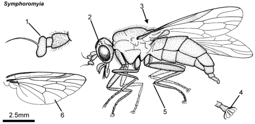 Diagram of horse fly product wiring diagrams diagram of horse fly images gallery ccuart Gallery