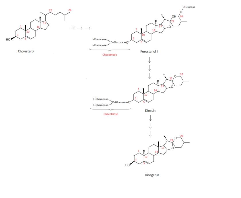 Pille und cortison
