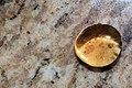 Syrup on Granite 3629.jpg