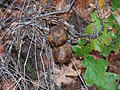 Table Rock Galls.jpg