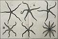 Tableau encyclopédique et méthodique des trois règnes de la nature (1791) (14581708827).jpg