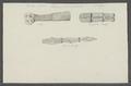 Taenia cucumerina - - Print - Iconographia Zoologica - Special Collections University of Amsterdam - UBAINV0274 105 19 0008.tif