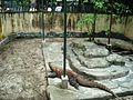 Taman Hewan Pematang Siantar (39).JPG