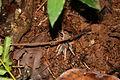 Tarantula (5554129567).jpg