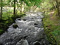 The Afon Gwynant - geograph.org.uk - 1313358.jpg