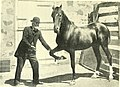 The Arab, the horse of the future (1905) (14760256416).jpg