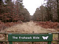 The Frohawk Ride in the Parkhill Inclosure, New Forest - geograph.org.uk - 121295.jpg