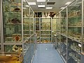 The Hong Kong Biodiversity Museum.jpg