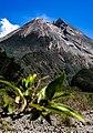 The Top of Merapi Mount.jpg