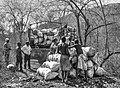 The charcoal makers.jpg