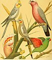 The illustrated book of canaries and cage-birds, British and foreign (1878) (14751514402).jpg