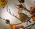 The king of all birds (22298035794).jpg