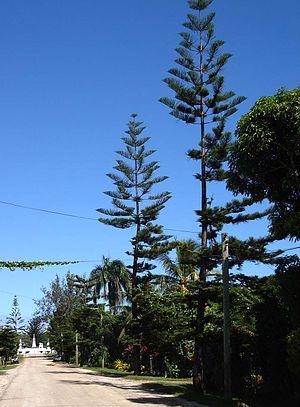 Malaʻekula - The Kings Road towards Malaʻekula, with the tomb of Siaosi Tupou I in the background