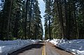 The recently cleared park highway (4b8fc0ef-f751-48be-a2c9-34e8fa93736b).jpg