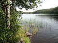 The river Vuoksa DSCN3976.jpg