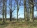 The trig point in Pasturehill Plantation - geograph.org.uk - 327366.jpg